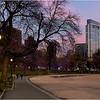Boston Common. December 11, 2020.