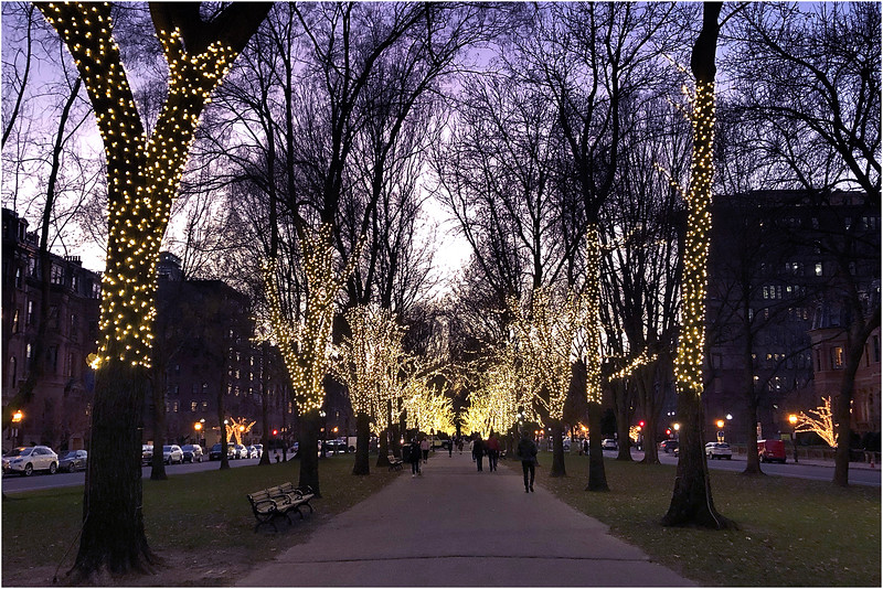 Commonwealth Avenue Mall. December 10, 2020.