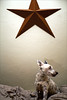 dot under star