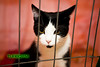 catshow-507