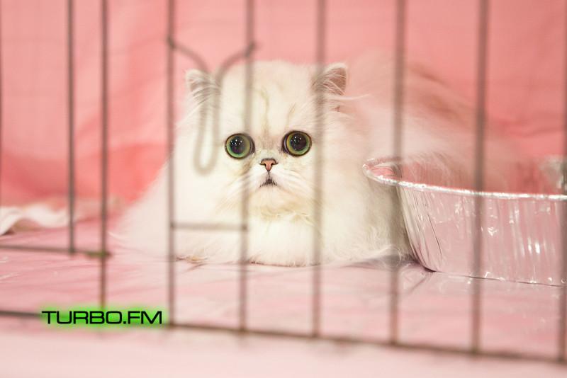 catshow-503