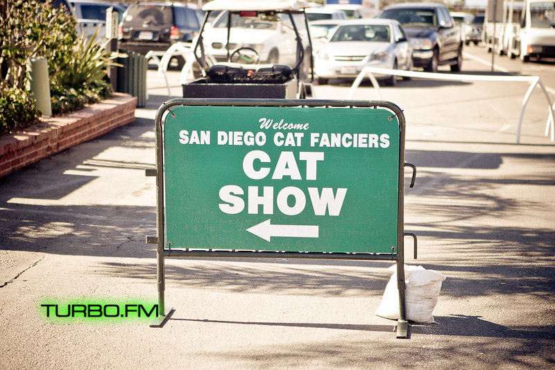 catshow-501