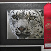 Gary's photo, second place winner in color animal & pets category. Delta Fair 2011