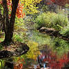 Carol's winning photo, first place color scenic category, Delta Fair 2011 - Photo taken in the fall of last year at the Memphis Zoo.