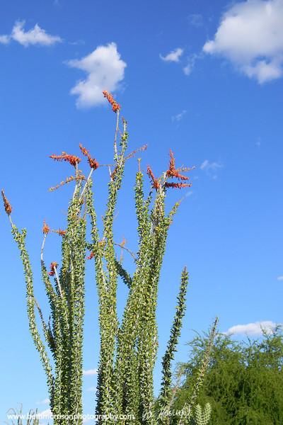 Desert Botanical Gardens 5-10-11 Phoenix AZ
