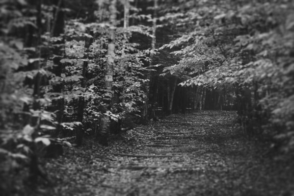 Pathways 2012 1650x1080-BW
