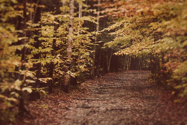 Pathways 2012 1650x1080-1