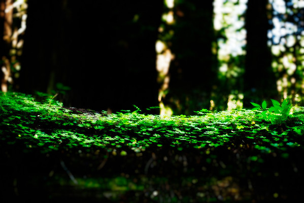 1650x1080 Desktop-Greenery