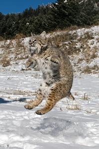 I feel like dancing yea!