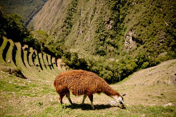 Peru_227