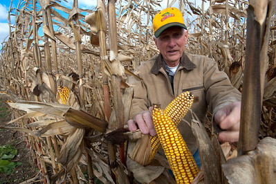 Gerry Surbrook inspects field corn at his Grand Valley Farms in Rives Junction, MI on Nov 10, 2013.   Wild turkeys have been damaging his corn, wheat and soybean crops.