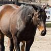 Thoroughbred Horse: Trio