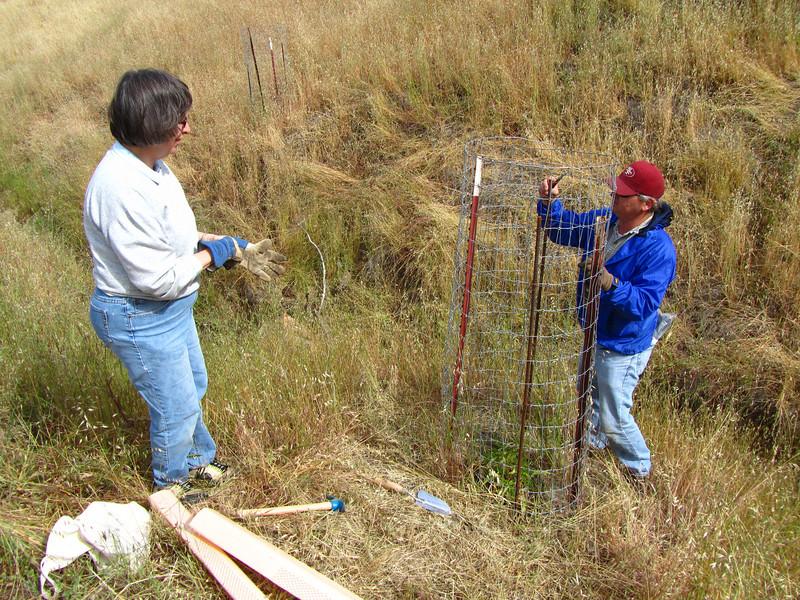 Kristin and Pete prepare to Tubex a buckeye seedling.