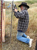 Dave closes a fence after adding Tubex to an oak seedling.