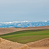 Snow on the Blue Mountains is enhanced by the soft and various colors of spring on the rolling wheat fields near Walla Walla,  March 16, 2012.  The flat topped mountain  in center is Table Rock, elevation 6250 feet, the highest in the Blues.