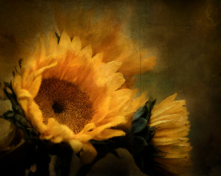 sunflowers final