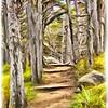Woods, Point Lobos California
