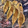 Autumn Leaves,Temecula California