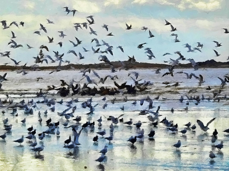 Salton Sea Bird Refuge