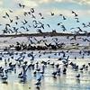 Salton Sea Bird Refuge