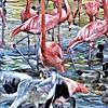 Flamingos, San Diego