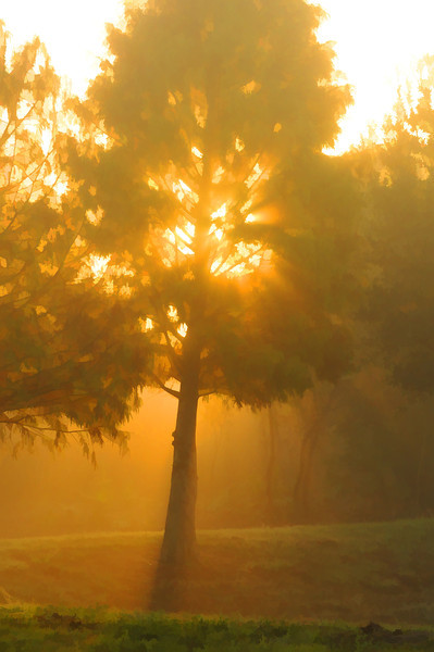 Morning Sun Rays and Tree