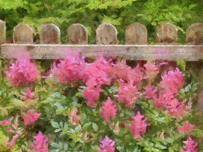 Something very pretty growing along the fence's edge at Jenney's Grist Mill in Plymouth.
