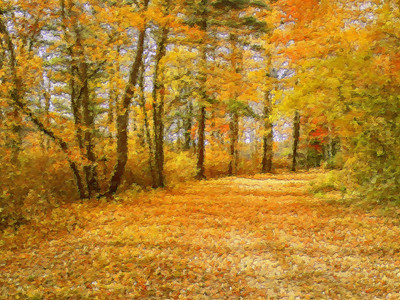 Autumn Stroll Ted Williams Camp Lakeville, Ma