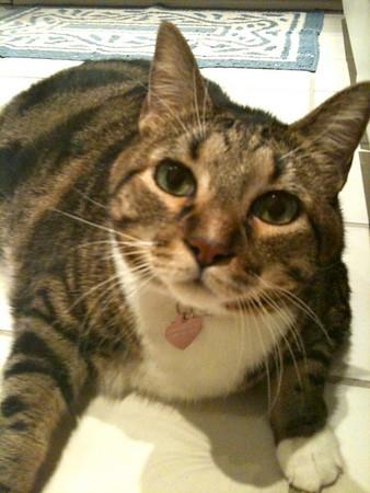 GK (Garage Kat), our friends beautiful cat.