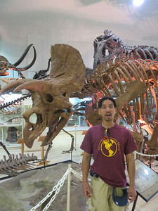 Rawwrr!..Do you know what type of classified dinosaur this skeleton is of?
