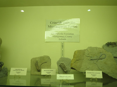 http://www.kgs.ku.edu/Extension/fossils/crinoid.html
