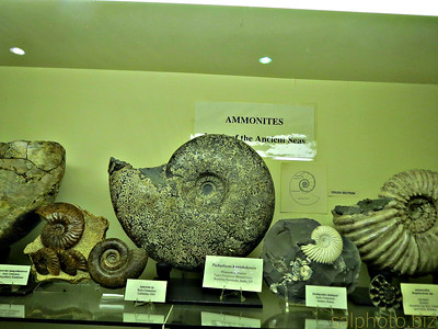 "http://www.discoveringfossils.co.uk/ammonites.htm  ""Ammonites are perhaps the most widely known fossil, possessing the typically ribbed spiral-form shell as pictured above. These creatures lived in the seas ..""  https://www.instagram.com/p/BVnjUrzjzIE/?taken-by=goodnews_usa"