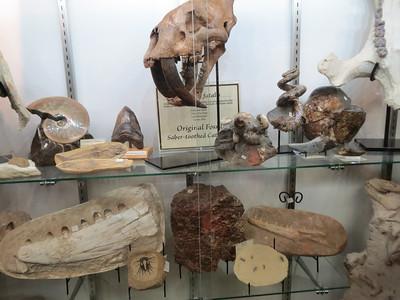 http://www.boneclones.com/catalog-fossil-cats.htm