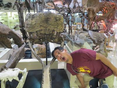 Getting eaten by a crocodile  http://dinosaurs.about.com/od/typesofdinosaurs/a/crocodilians.htm  http://www.prehistoric-wildlife.com/species/s/sarcosuchus.html  https://www.instagram.com/p/BpD4s3ZnRKP/?taken-by=saldapal18