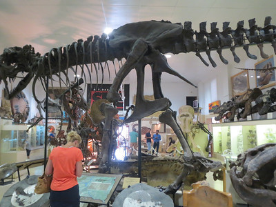 http://animal.discovery.com/dinosaurs/tyrannosaurus.htm  Tyrannosaurus Rex Was a Cannibal? http://www.creationtoday.org/tyrannosaurus-rex-was-a-cannibal/?doing_wp_cron=1375675143.4098079204559326171875