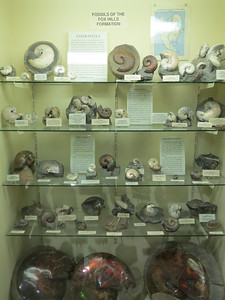 http://www.fossilmuseum.net/Fossil_Sites/foxhillsformation.htm