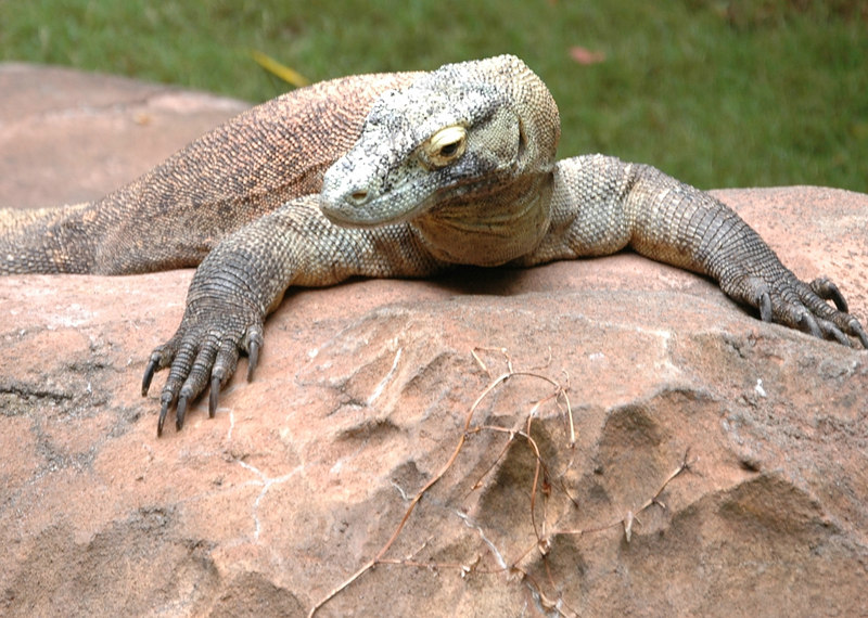 Reptile at the Animal Kingdom