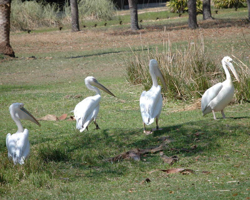 Birds at the Animal Kingdom Lodge