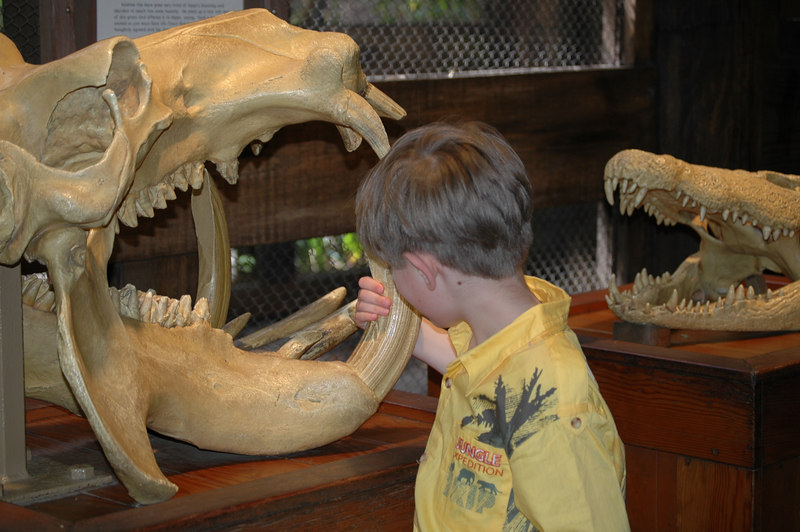 Zach checking out the animal skulls at the Animal Kingdom