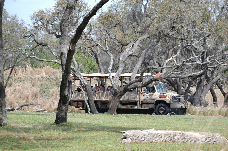 Safari Ride at the Animal Kingdom