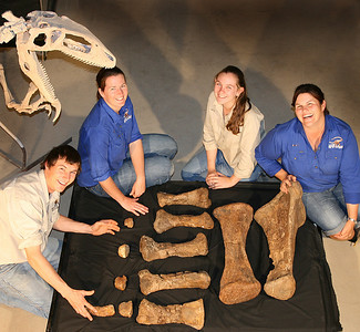 Australian Age of Dinosaurs Staff with the fossilised forearm and toe bones of Matilda [Diamantinasaurus matildae]. L to R: George Sinapius, Wendy Ballinger, Kate Durack and Trish Sloan