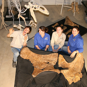 Australian Age of Dinosaurs Staff with the fossilised left pelvic elements of Matilda (Diamantinasaurus matildae). L to R: George Sinapius, Wendy Ballinger, Kate Durack and Trish Sloan.