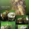 GRAY WHALE bone cleaning. Oak Harbor, Whidbey Island. June 28, 2012