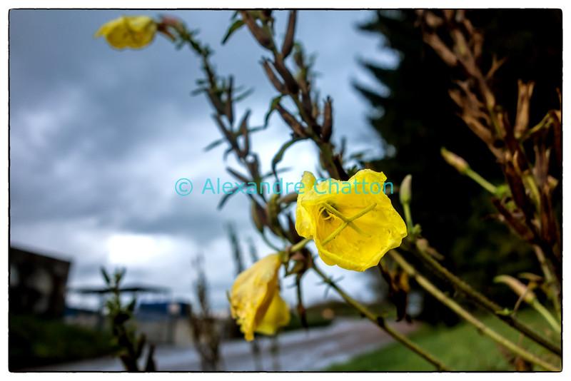 Fleur de début d'automne