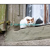 """Le chat dans une attitude et un endroit """"chat""""..."""