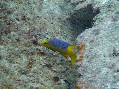 Diving December 4, 2010