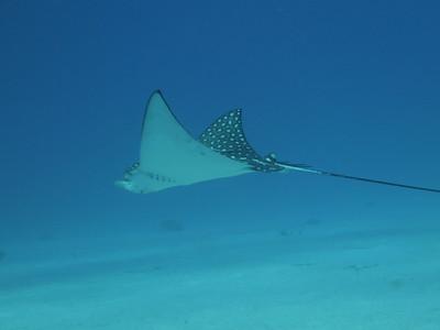 Diving December 11, 2010