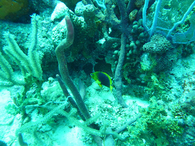 Diving November 11, 2010