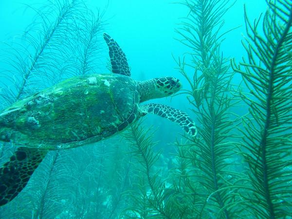 Diving November 19, 2010