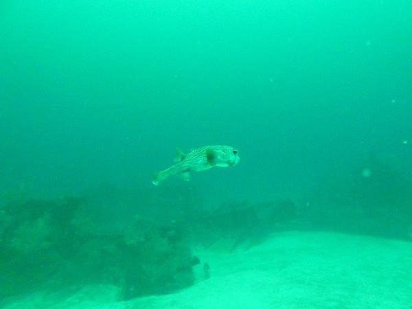 Diving October 17, 2010